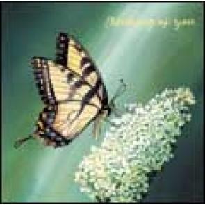 CD Card - Butterfly